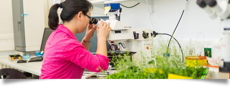 I am writing a fifteen page essay on the Arabidopsis thaliana. I need resource links. Tips ?